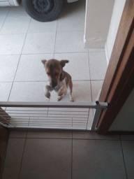 Cachorro doacao