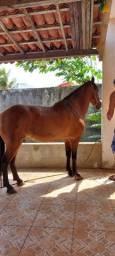 Cavalo oportunidade apenas R$2.900,00