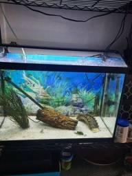 Vendo 2 aquários