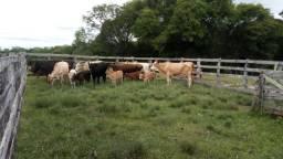 Vendo vacas com cria