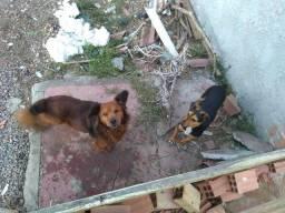 Doa- se cachorros
