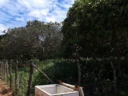 Granja com 8,8 há, 2 casas, 1 cacimbões, 2 poços, toda irrigada, perto da reta tabajara