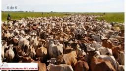 8271 | Fazenda à venda com 1 quartos em ZONA RURAL, POCONÉ