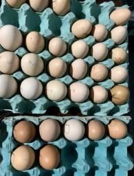 Ovos galados de Índios Gigantes Puros
