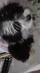 Naruto cachorro perdido !!
