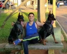Filhotes de Dobermann cão de guarda com Pedigree macho e fêmea Doberman filhote