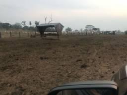 Execelente Fazenda Terra PRETA 1800  PECUÁRIA  no MS 15 mil por ha