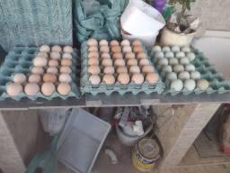 Título do anúncio: Ovos de galinhas