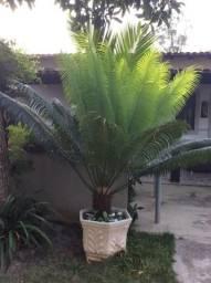 Vendo sagu 22 998190791 comprar usado  Rio das Ostras