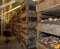 Sociedade para cultivo de cogumelos