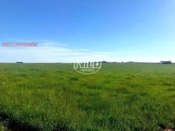 Exclusivo - Linda área de 65 hectares com Lavoura do lado da cidade!