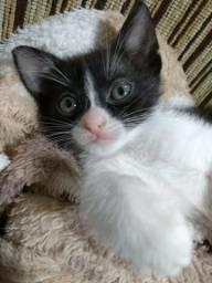 Lindos gatos para doação - são 6 filhotes