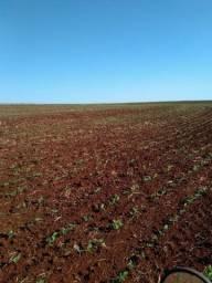 Area terra para pecuaria e agricultura, Sto Ant das Missões_140HA
