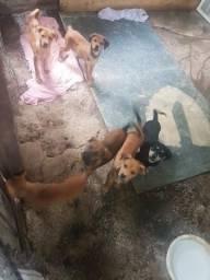 Cachorro pra doação. lindos cachorrinhos