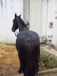 Vendo Cavalo Mangalarga Machador (Picado)