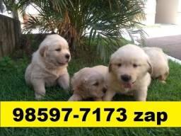 Canil Excelência Cães Filhotes BH Golden Akita Boxer Labrador Dálmata Pastor