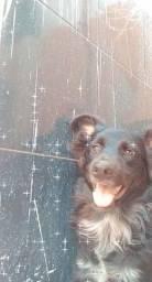 Cachorro porte grande pra adoção responsável!