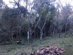 Terreno em Urubici /sitio em Urubici/Área em Urubici