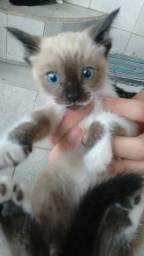 Doam-se gatinhos recém nascidos