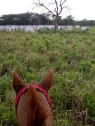 8271 | Fazenda à venda com 1 quartos em ZONA RURAL, ROSÁRIO OESTE