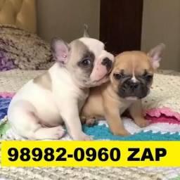Canil Filhotes Belíssimos Cães BH Bulldog Basset Beagle Lhasa Poodle Yorkshire Shihtzu