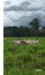 Excelente Fazenda há 70 km de Cuiabá