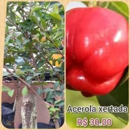 Frutífera em oferta