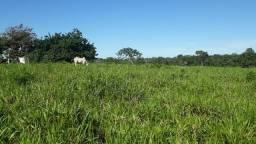Fazenda com dupla aptidão agricultura ou pecuária
