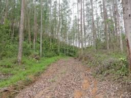Área Reflorestada em Leoberto Leal