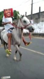 Cavalo tordilho roubado aí