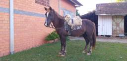 Cavalo forte