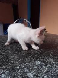 Adoção de gata