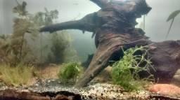 Aquário Com tronco de Aroeira