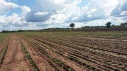 Fazenda a 28 km do trevo do lagarto 270 hectares