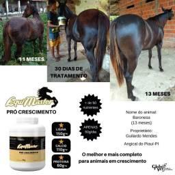 Suplemento para  Cavalo - Potro -Competição