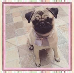 Título do anúncio: Pug abricot Fêmea 11 meses