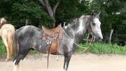 Cavalo manga langa
