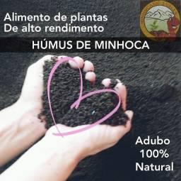 humus de minhoca