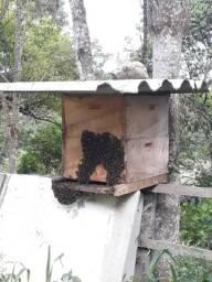 Mel abelhas