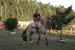 Vendo égua mansa boa de laço