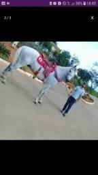 Venda de Cavalo Mangalarga Marchador Registrado