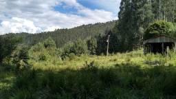 Fazenda Sitio Chácara Gado Reflorestamento Pinus Eucalipto