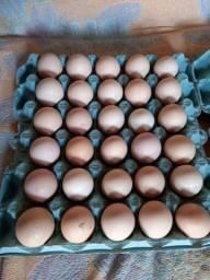 Vendo Ovos Galados Caipira Galinhas Grandes