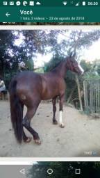 Égua manga larga sem registro
