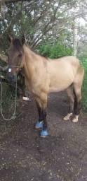 Cavalo de esteira, 7 anos