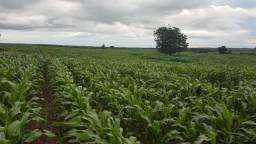 Fazenda no Pará,5.578 alqueires por 150 milhões porteira fechada
