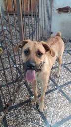 Doação Cachorro Macho