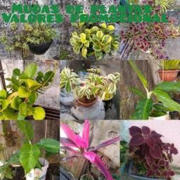 Título do anúncio: Lindas plantas