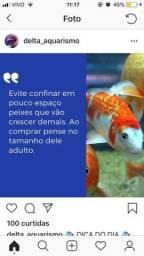 Aquarismo para todos