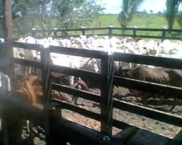 Vendo fazenda com 150 hectáreas